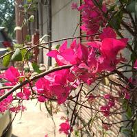 Aishwarya Yerra Searching For Place In Bengaluru